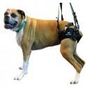 harnais-train-arriere-pour-chien-walkin-wheels.jpg