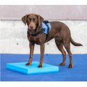 Balance Pad pour rééducation animale