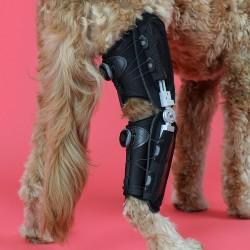 Orthèse du genou pour chien Caerus