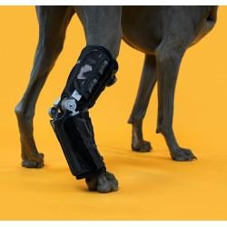 Orthèse de cheville pour chien Caerus