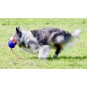 Tarsoflex Sport : attelle de maintien pour chien