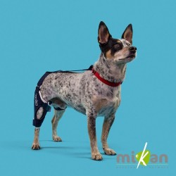 Genouillère pour chien et chat Mikan