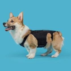 Ceinture dorsale pour chiens et chats hernie lombaire