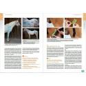 Livre de taping pour chevaux