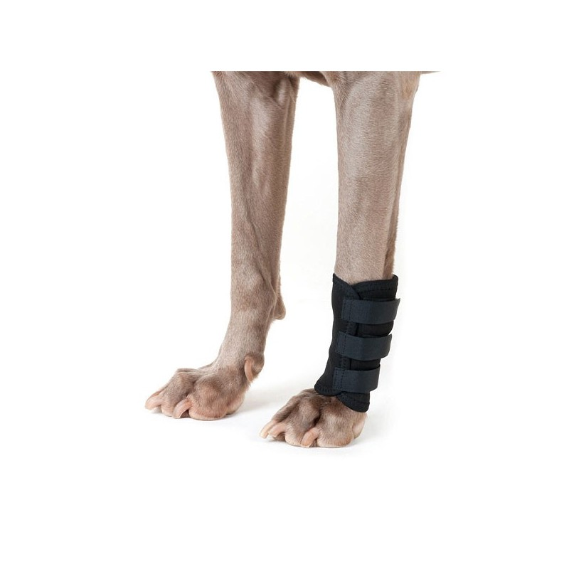 Thermo Carpe : attelle patte avant BACK ON TRACK