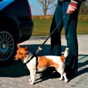 Laisse de sécurité voiture chien chats