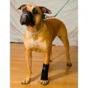 Carpoflex X : attelle de maintien pour chien – patte avant