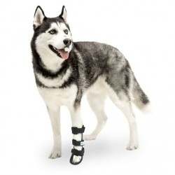 Attelle rigide walkin wheels – patte avant chien et chat