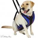 Harnais total Walkin Pets pour chien handicapé Mikan