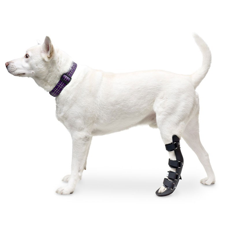 Attelle rigide walkin wheels – patte arriere chien et chat