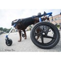 Ceinture avant néoprène pour chariot Walkin Wheels Mikan chien chat