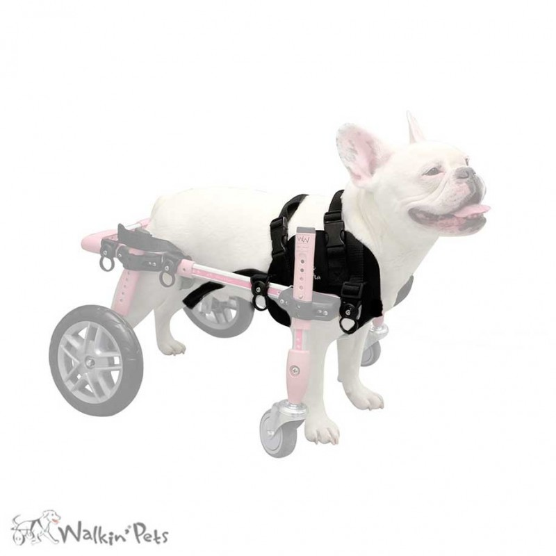 Harnais avant néoprène chien chariot roulant Walkin' Wheels mikan
