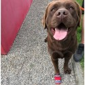 Bottines chaussure protection chien Ruffwear mikan