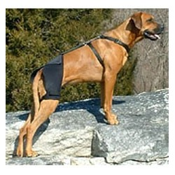 Orthèse de hanche Ortho Dog