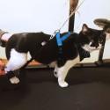 Élastiques pour système Biko - paires remplacement pour chiens et chat Mikan