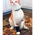 Carpoflex X mini : attelle de maintien pour chat et petit chien patte avant Mikan Thera Paw