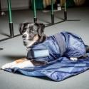 tapis rafraîchissant pour animaux Cool on Track