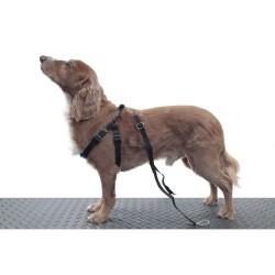 Harnais animaux pour tapis de marche Fit Fur Life