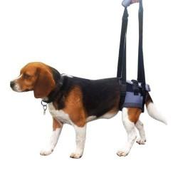 Harnais pattes arrière pour chien