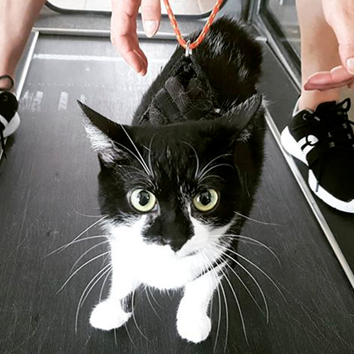 Bonny Bat Cat