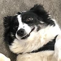 Graffy chienne top modèle Mikan