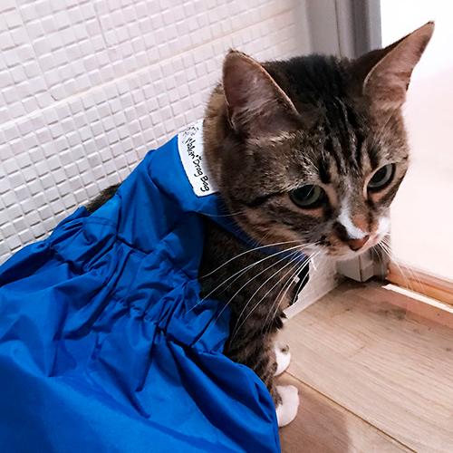 La Teigne chat top modèle Mikan