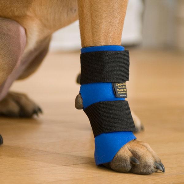 Attelle pour chiens après une opération ou blessure