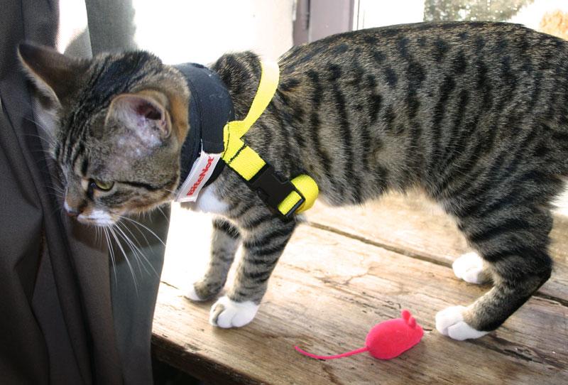 Collier BITE NOT collerette chat chaton suite opération stérilisation Misty