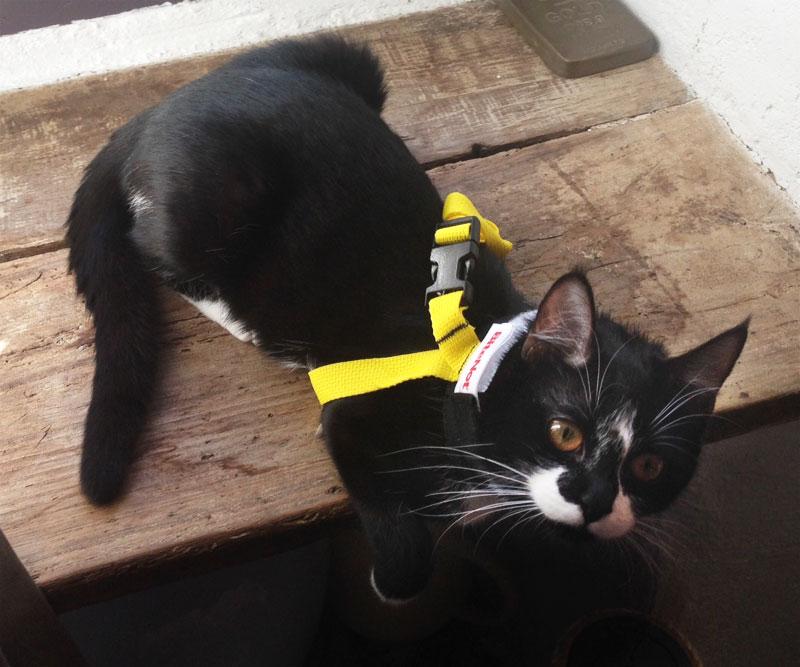 Collier BITE NOT collerette chat chaton suite opération stérilisation Mina