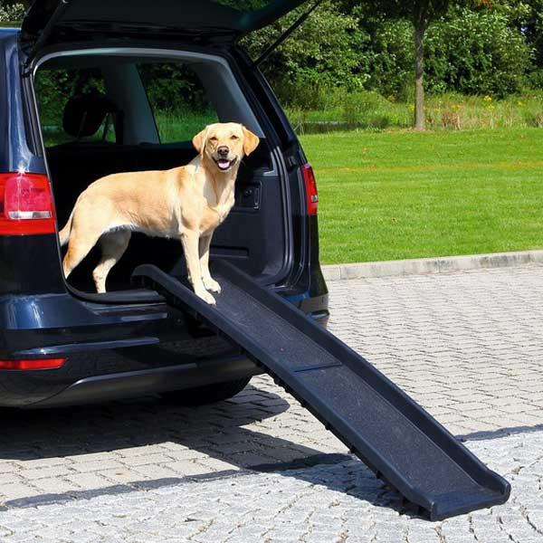 chien voiture 4x4 SUV