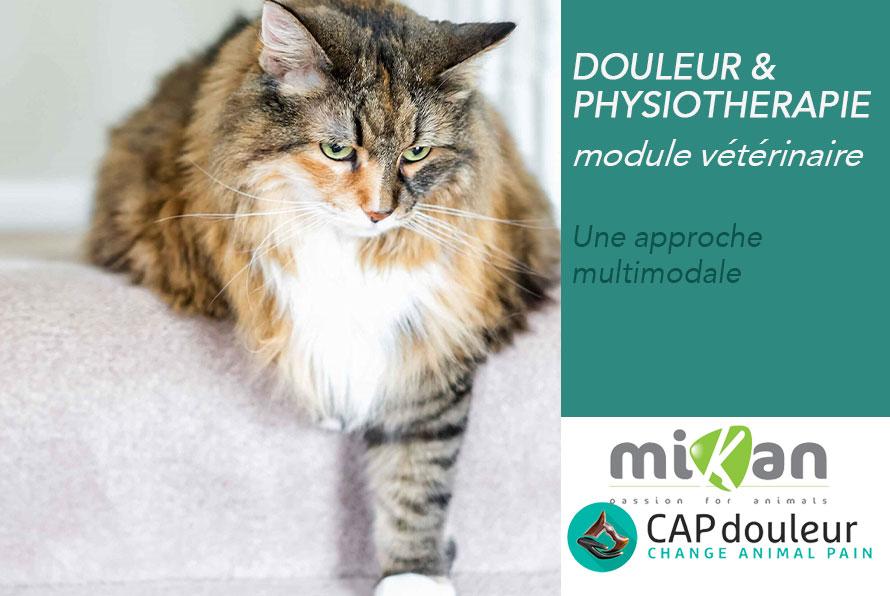formation douleur physiothérapie capdouleur mikan