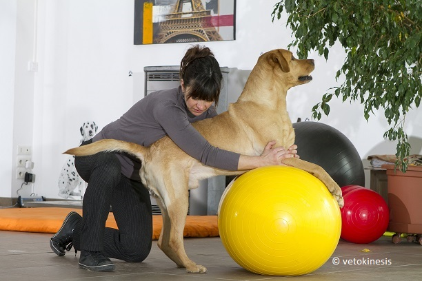 formation physiothérapie vétérinaire