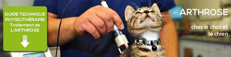 Guide des traitement physiothérapie arthrose chien et chat