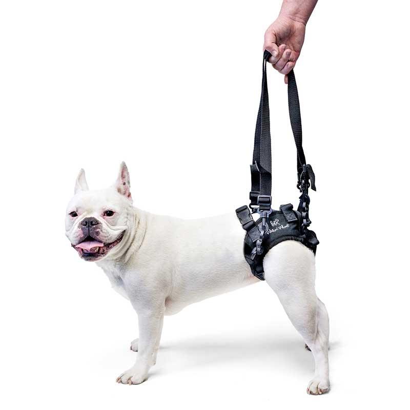 pourquoi choisir des harnais sp cifiques pour chiens g s ou handicap s. Black Bedroom Furniture Sets. Home Design Ideas