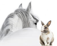 Mikan spécialiste Physiothérapie animal pour vétérinaires