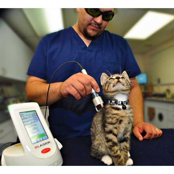 k-laser-vet-therapie-veterinaire-animaux-mikan