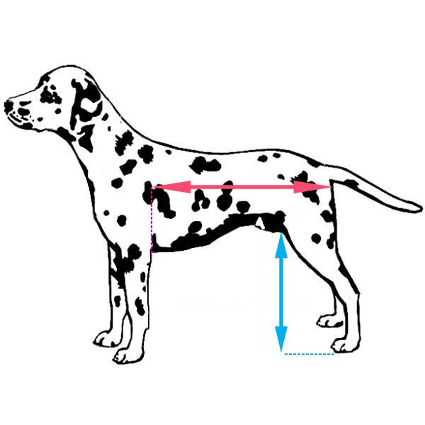 prise mesure pour chariot roulant chien walkin wheels Mikan