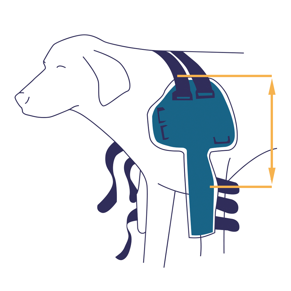 Prise de mesure attelle épaule chien Balto Mikan