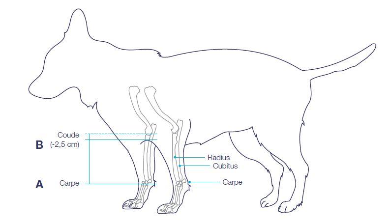 prise-mesure/prise-de-mesure-attelle-immobilisante-radius-animaux-mikan.