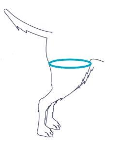prise-mesure/prise-de-mesure-orthèse-hanche-pattes-arrière-balto-mikan