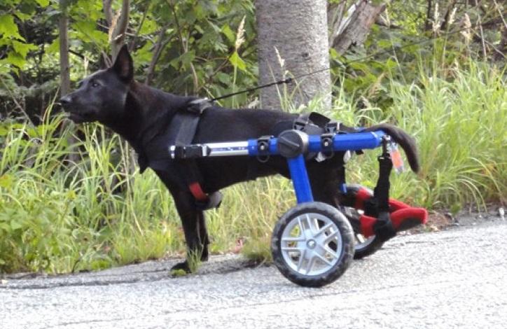 Chariot pour chien Walkin Wheels