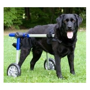 chariot-roulant-pour-chien-handicape-walkin-wheels-