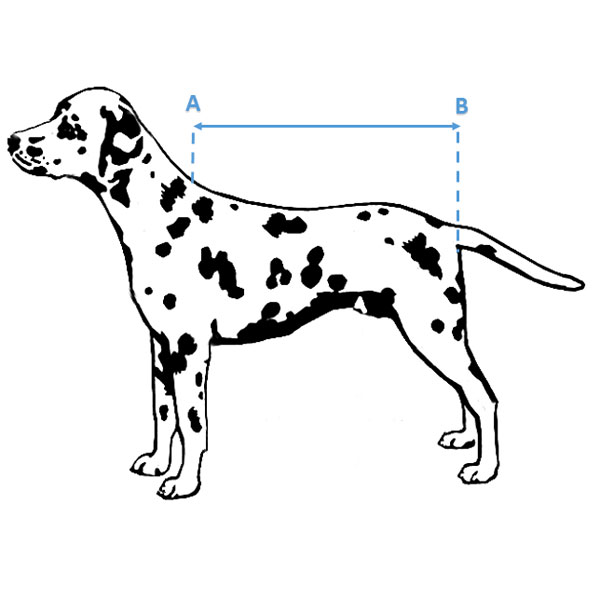 prise mesure manteau extérieur chien imperméable