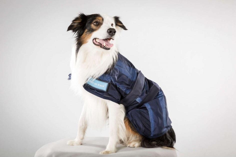 manteau-rafraichissant-pour-chien-cool-on-track-mikan