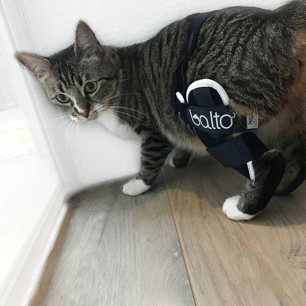genouillere chat balto mikan