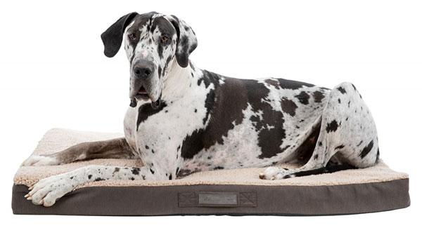 Matelas à mémoire de forme pour chiens et chats