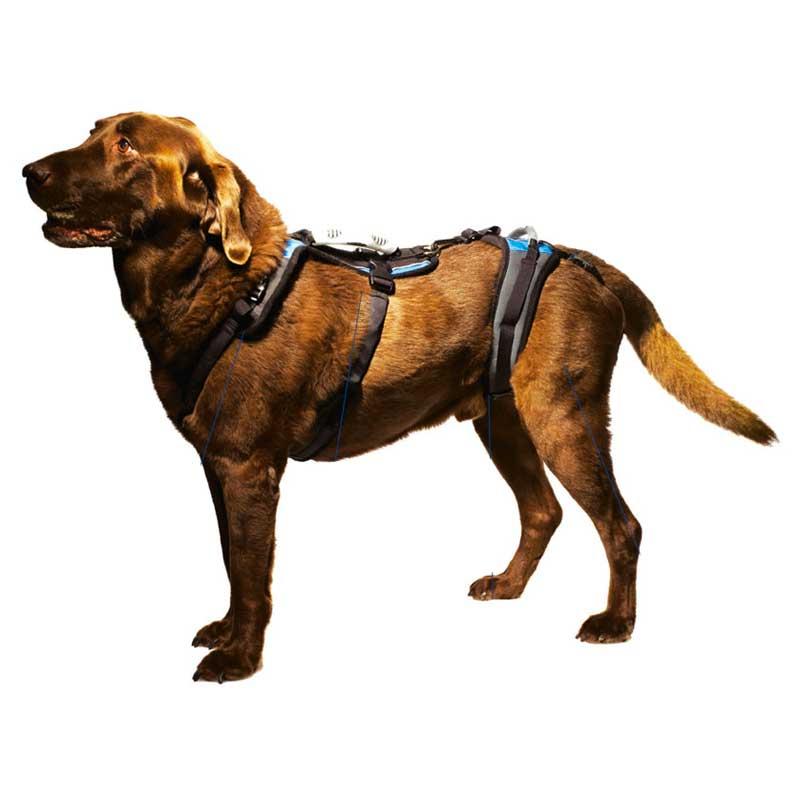Harnais El em up pour chiens