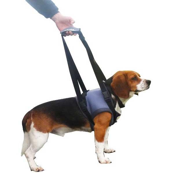 le harnais pour petit chien handicap la bonne solution mikan vet. Black Bedroom Furniture Sets. Home Design Ideas