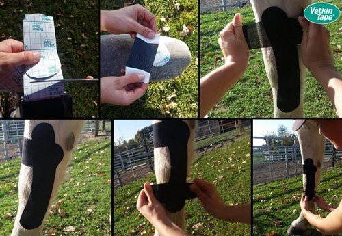 application bande taping deformation jambe poulain