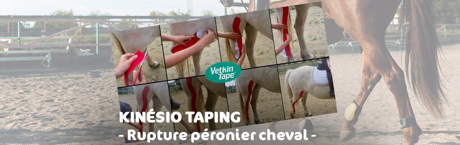 kinesio taping pour fracture péronier cheval